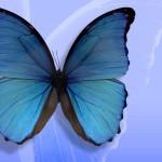 borboleta-azul_2977_1600x1200