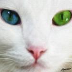 gato-branco_2999_1600x1200