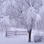 paisagem-de-inverno_1363_1600x1200