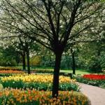 parque-de-tulipas_647_1600x1200