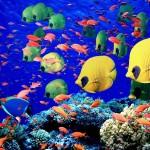 peixes_1291_1600x1200