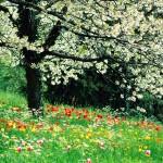 primavera-_1125_1600x1200