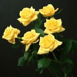 seis-rosas_1214_1600x1200