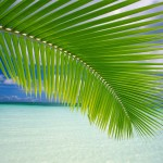 vista-tropical_1283_1600x1200