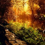 floresta_905_1600x1200
