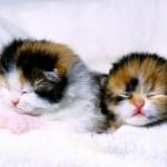 gatinhos-dormindo_3828_1600x1200
