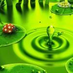 joaninha-e-ambiente_4711_1680x1050
