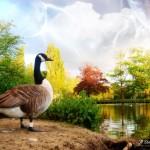 pato-no-lago_1727_1600x1200