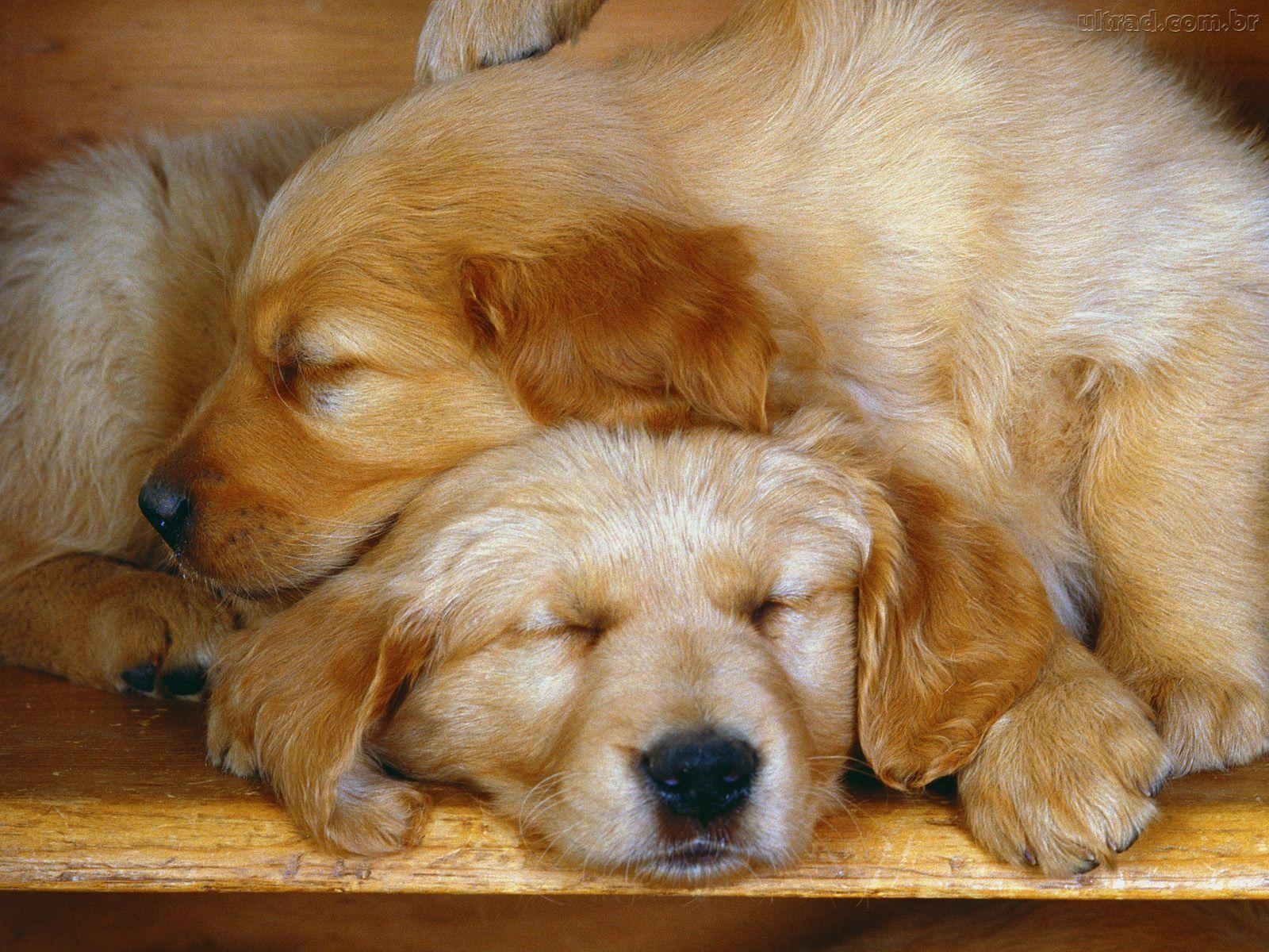 http://www.sopapeldeparede.com.br/wp-content/uploads/2010/03/103572_Papel-de-Parede-Cachorros-Dormindo_1600x1200.jpg