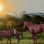BXK17075_cavalos-ao-sol800