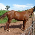 BXK20414_cavalo-02800