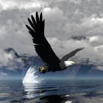 Eagle_3D