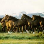 cavalo0006