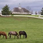 cavalos-25