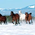 cavalos-5645