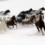 cavalos-horses-wallpaper1