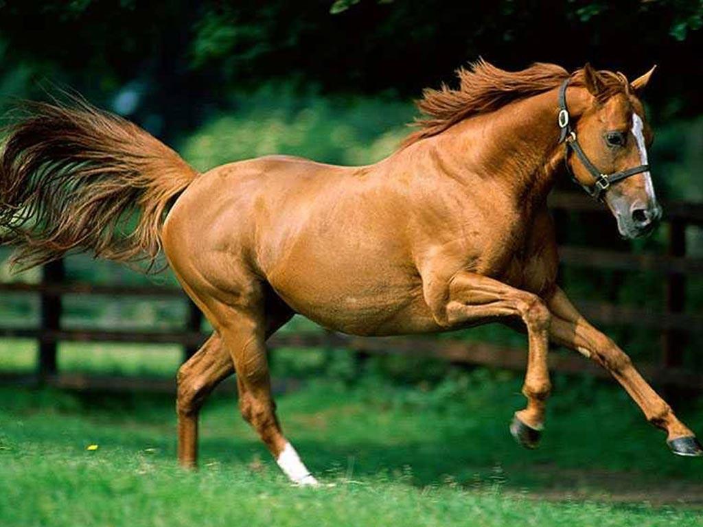cavalos-wallpapers