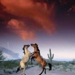 cavalos_938_1024x768