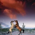 cavalos_938_1152x864