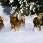 cavalos_neve-1024