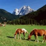 fotos-cavalos