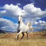 mitos-cavalos-brancos