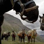 papel-parede-104-cavalos-de-carga_1024