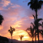 sundown_palms