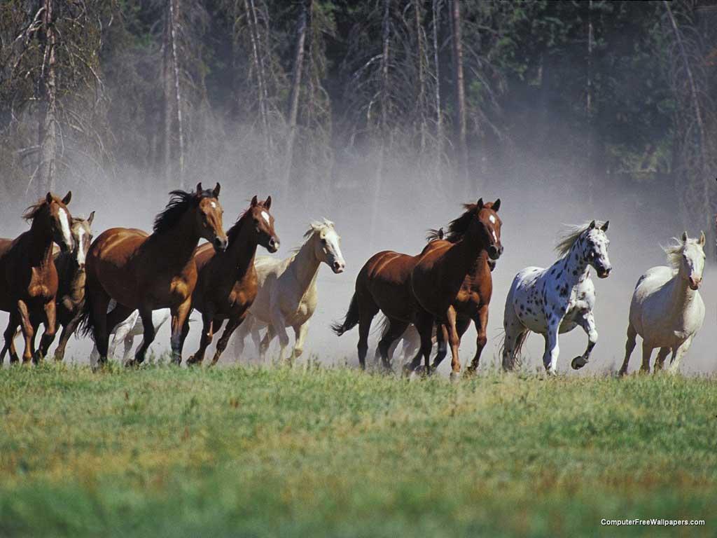 tropa-de-cavalos-a09ba