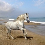 walrs-fis-cavalos-2
