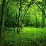 dark-green-forest