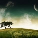 swp_tree_2560x1600