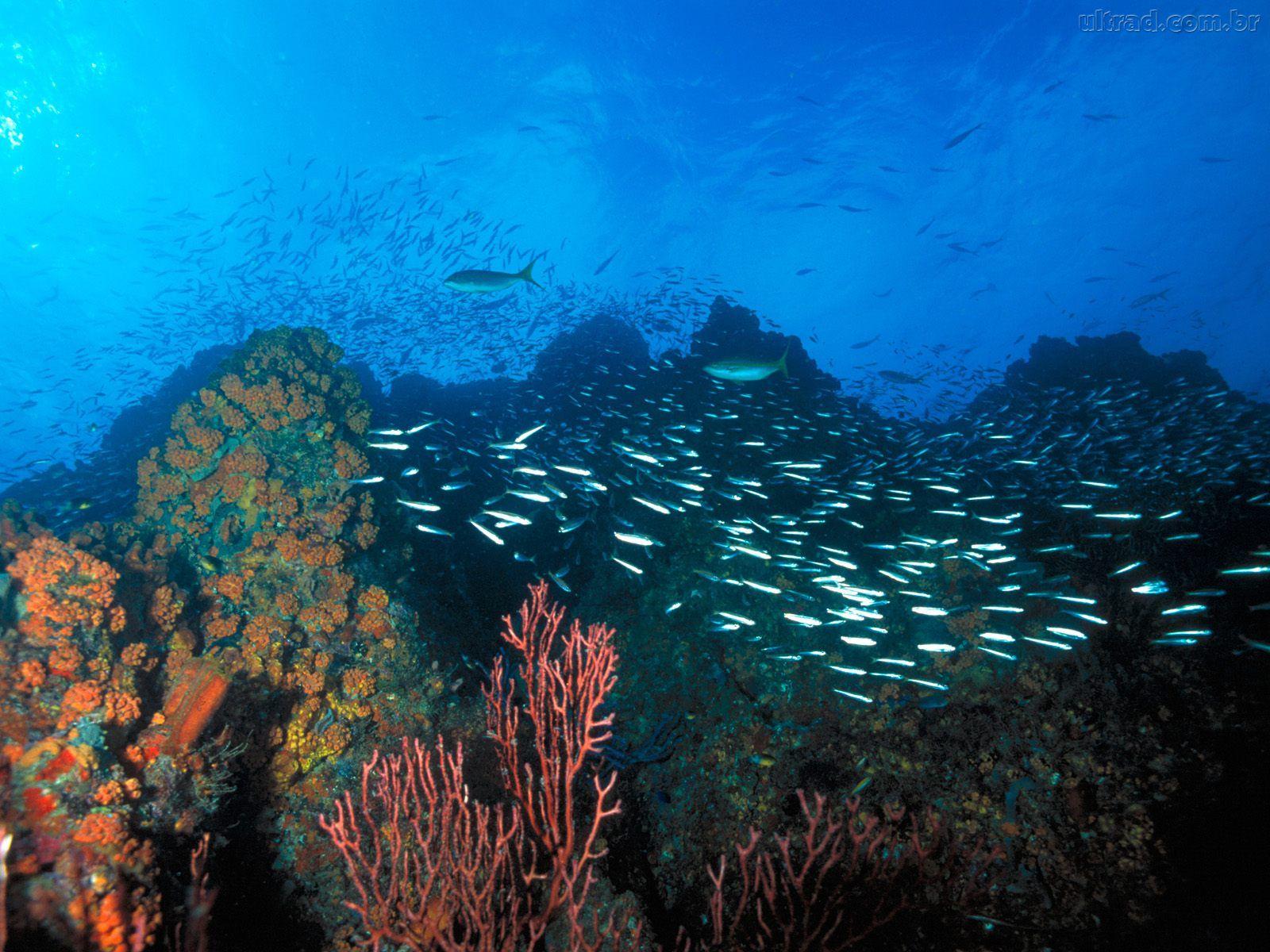 Desafios do fundo do mar   TV Selvagem