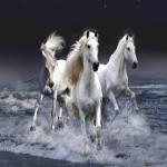 amazing-widescreen-animal-wallpapers_1600x1200_88281