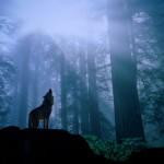 wolf_1600x1200_wallpaper