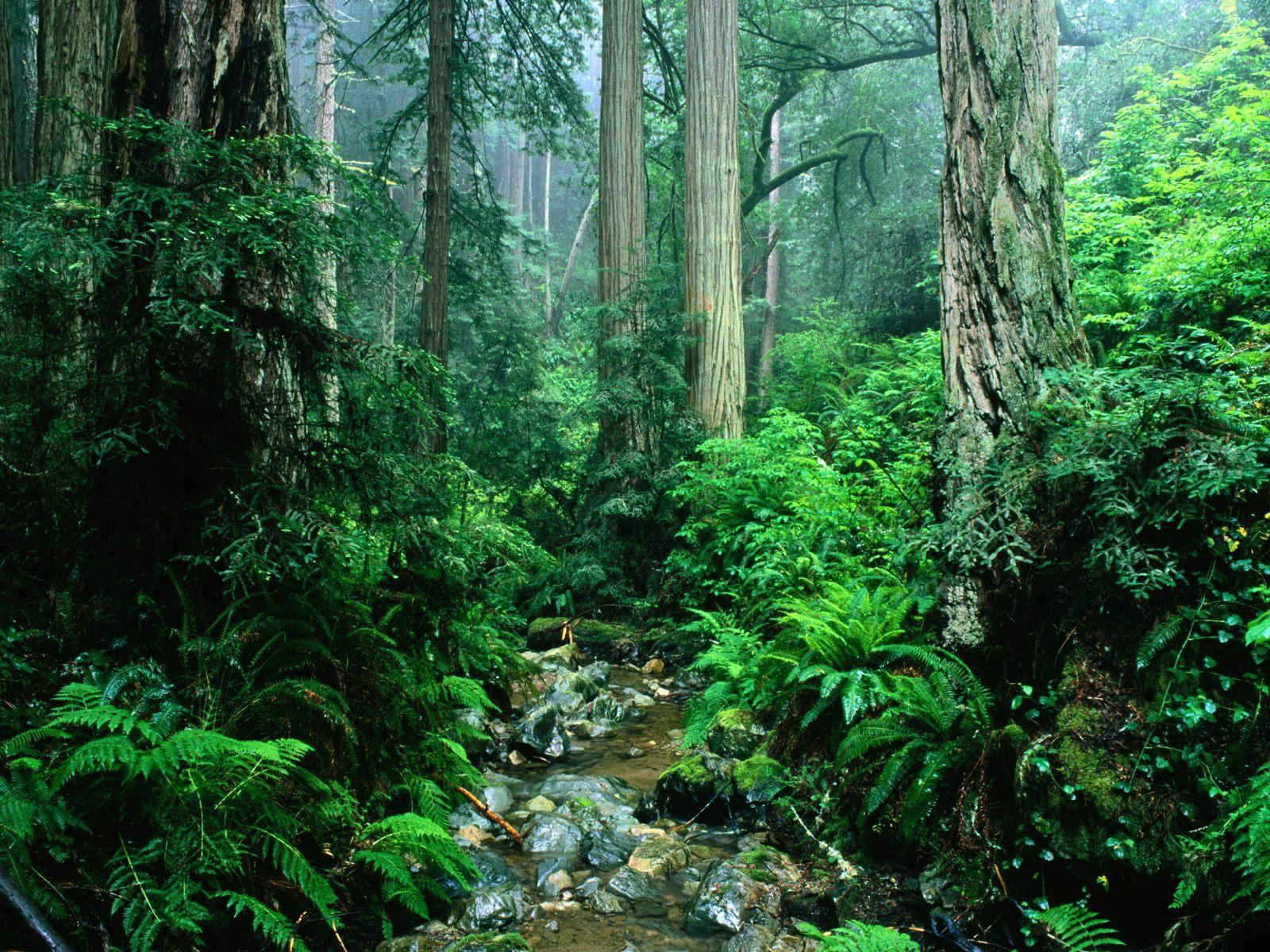 Floresta e pequeno riacho