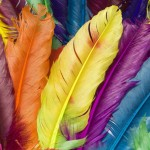 Colourfulfeathers