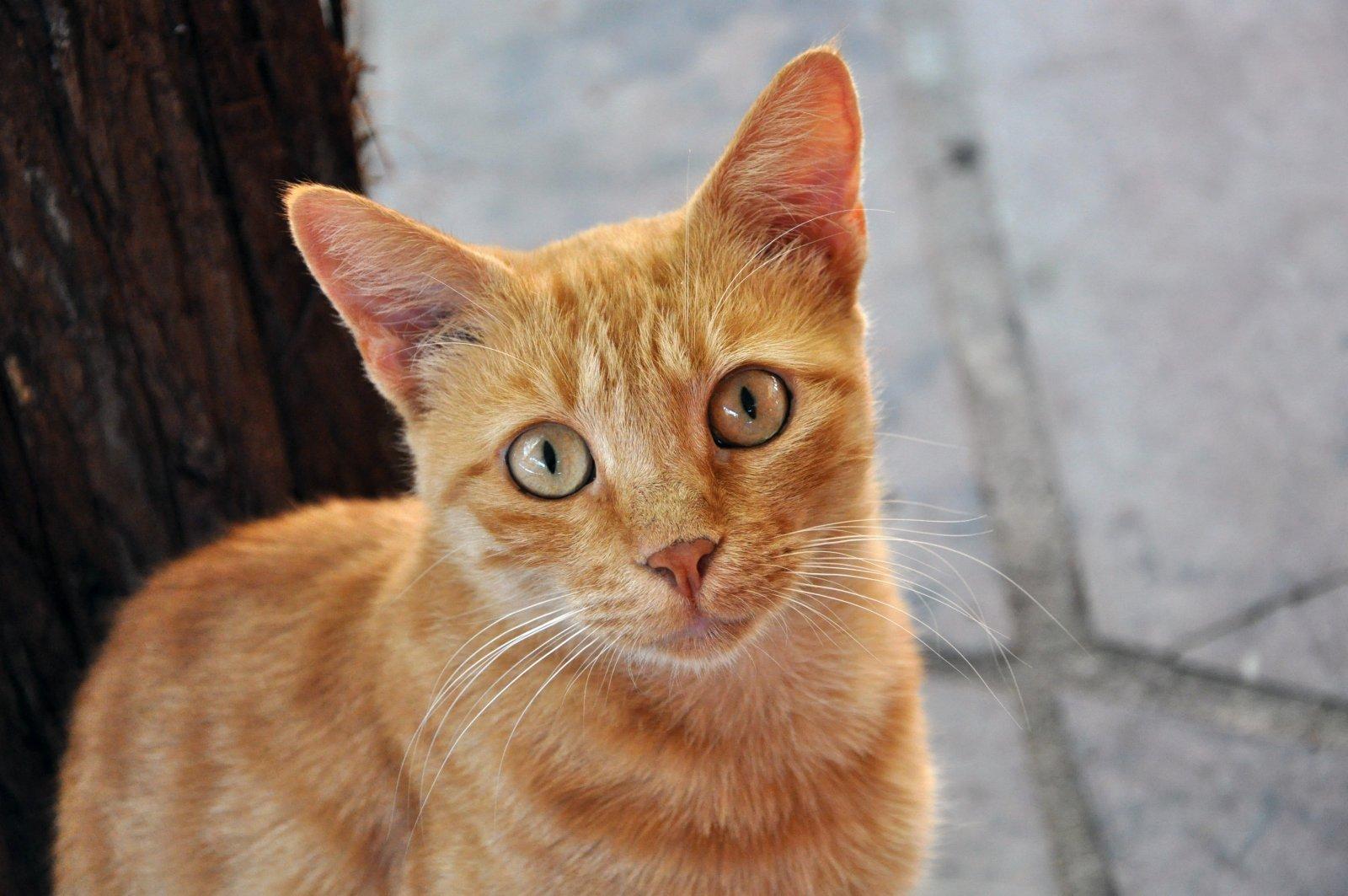 Papel de Parede de Gatos