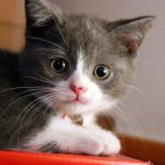 gatos pequenos 3