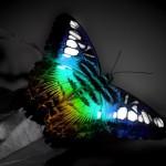borboleta--colorida_7817_1280x960