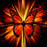 wallpaper-borboleta-do-amor-5802