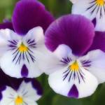 111549_Papel-de-Parede-Flores--111549_1600x1200