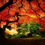papel-de-parede-arvore-lindo_outono