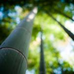 papel-de-parede-bambu