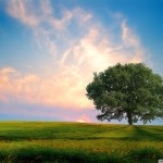 papel-de-parede-bela-e-intensa-natureza (12)