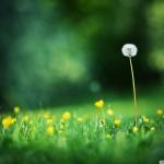 papel-de-parede-bela-e-intensa-natureza (5)