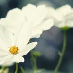 papel-de-parede-bela-e-intensa-natureza (7)