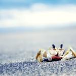 papel-de-parede-crustaceo