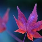 papel-de-parede-flor-rosada