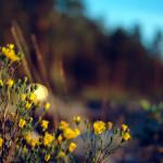 papel-de-parede-flores-amarelas